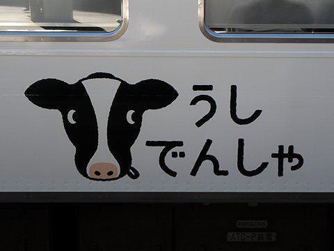 cow_train_kd_04.jpg