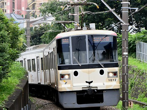 sheep_train_kd_01