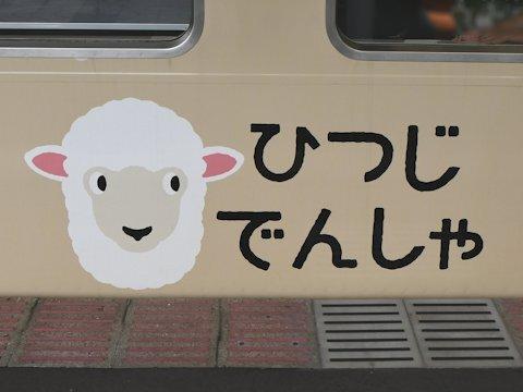 sheep_train_kd_02